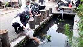 Pelepasan Benih Ikan di Saluran Irigasi Kelurahan Wirogunan